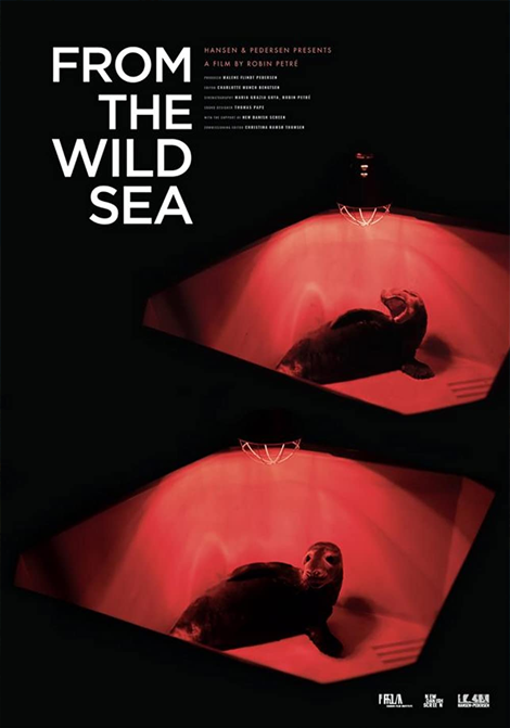 From the Wild Sea poster